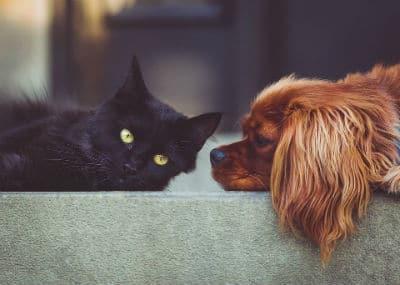 Partager-chien-chat-bénévoles
