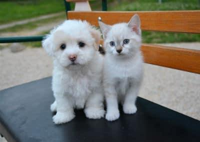 possibilités-garde-chien-et-chat