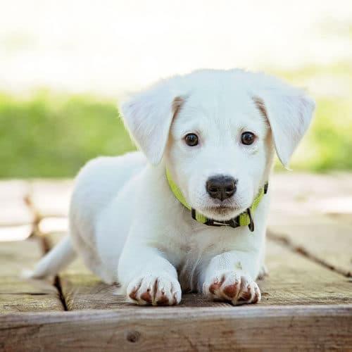 Faire garder son animal, son chien, son chat, garde d'animaux par Partage mon 4 pattes