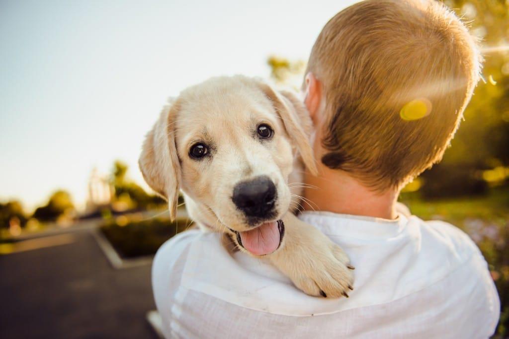 Garde de chien, chat entre particuliers