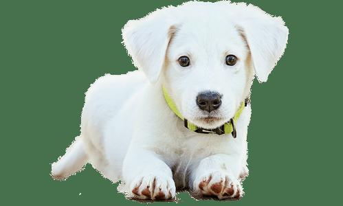 garde-gratuite-chien-chat