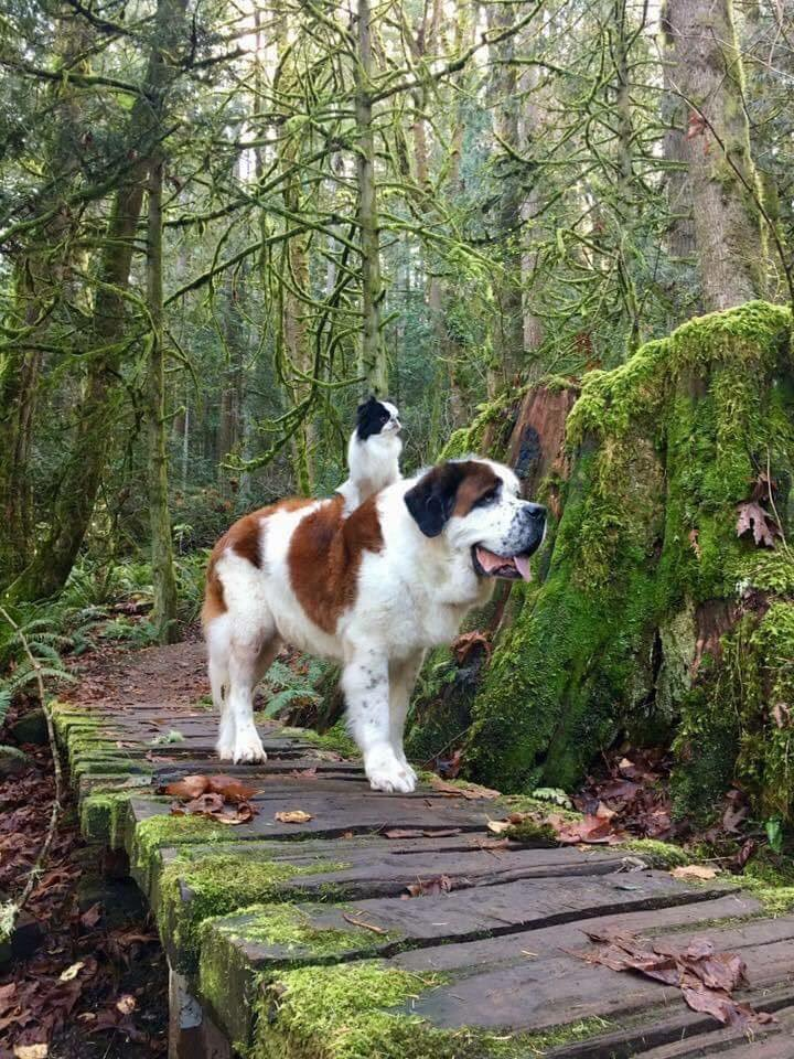 promenade-nature-chien-chat