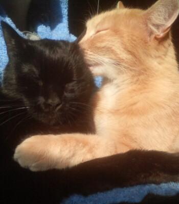 Philius et Yoko